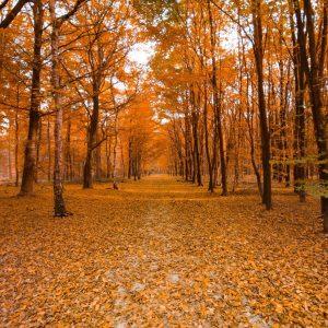 fall-ornamental-care