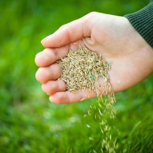 winter-dormant-seeding