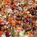 fall-flower-bed