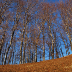 trees in late fall